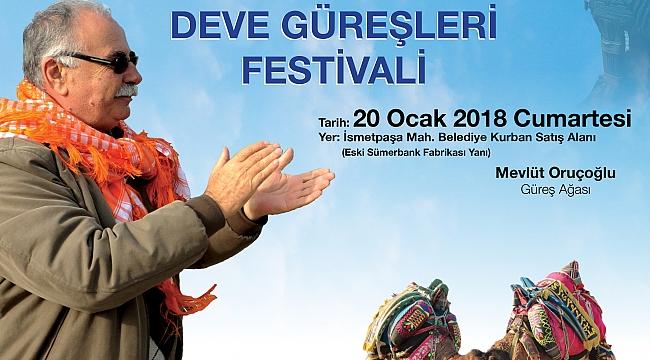 Deve Güreşi Festivali 20 Ocak'ta Gerçekleştirilecek
