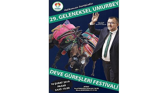 UMURBEY 29. GELENEKSEL DEVE GÜREŞLERİ FESTİVALİNE HAZIRLANIYOR